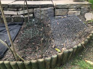 Gardening free-range: Chickens 6