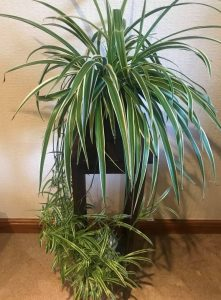 5 Easy Care Houseplants 4